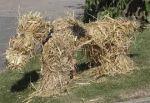 Another of Nancy Sarowski's straw dogs